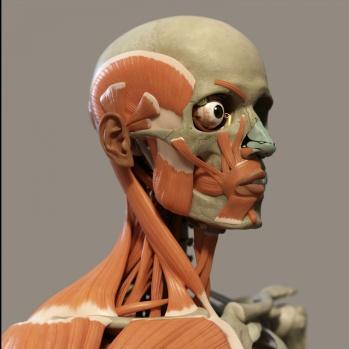 human-anatomy-1517256616AlU